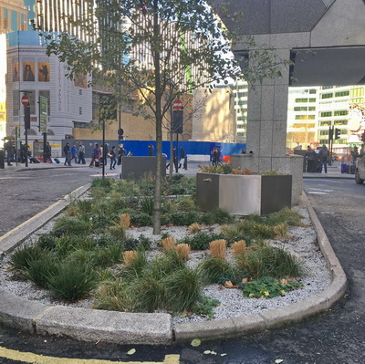 Rain Garden John Lewis HQ London