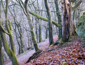 woodlandvolunteer