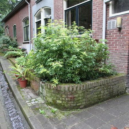 Elzenweg, Beek, Nijmegen, Gelderland, Nederland