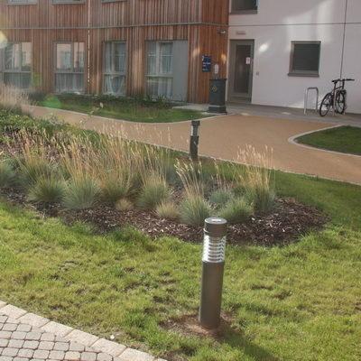 Rain Garden York University