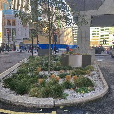 Rain Garden John Lewis HQ London