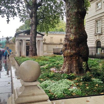 Trees in rain garden planter, London